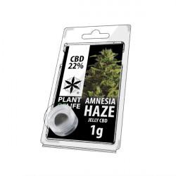 Gelee CBD AMNESIA HAZE 22% 1G Pflanze des Lebens